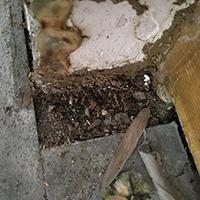 古建筑白蚁防治