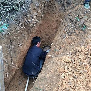 2米深的蚁巢